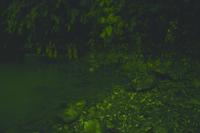 続々と上陸し崖をのぼるゲンジボタルの幼虫の光跡