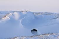 ホッキョクグマ(シロクマ)の巣穴 32236000085| 写真素材・ストックフォト・画像・イラスト素材|アマナイメージズ