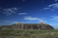 岩の上から周囲を見渡すライオン 32236001222  写真素材・ストックフォト・画像・イラスト素材 アマナイメージズ