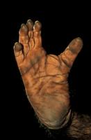 チンパンジーの足の裏
