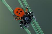 イワガネグモの仲間