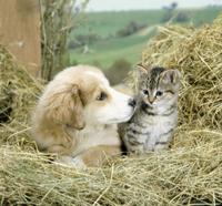 干し草の中のイエネコとイヌ(飼い犬)の子