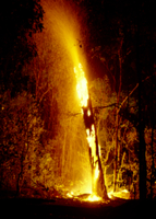 落雷で燃える木