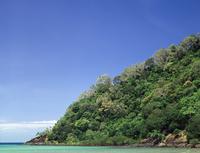 熱帯雨林とマングローブ 32240000442| 写真素材・ストックフォト・画像・イラスト素材|アマナイメージズ
