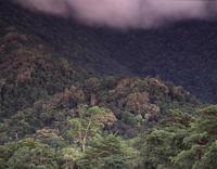 熱帯雨林とマングローブ 32240000443  写真素材・ストックフォト・画像・イラスト素材 アマナイメージズ