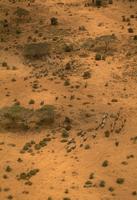 アフリカゾウの群れ 空撮 32240000495| 写真素材・ストックフォト・画像・イラスト素材|アマナイメージズ