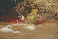 トムソンガゼルを捕食するナイルワニ 32240000600| 写真素材・ストックフォト・画像・イラスト素材|アマナイメージズ