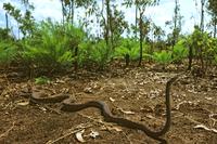 ニシキヘビの仲間