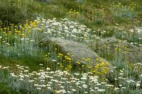 コジオスコ国立公園に咲く春の花