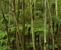 グレートディバイディング山脈東の硬葉樹林