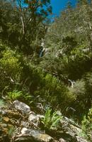 ナマジ国立公園の渓流