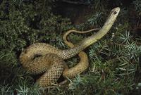 ヘビの仲間