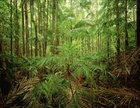 ナイトキャップ国立公園 亜熱帯雨林
