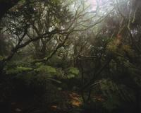 ゴワー山山頂の雲霧林