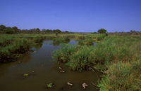 クルーガー国立公園の湿地帯