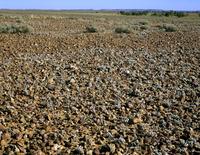 ギバーの砂漠
