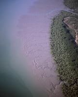 セントジョージ盆地 マングローブとイリエワニの生息地 32240003064| 写真素材・ストックフォト・画像・イラスト素材|アマナイメージズ