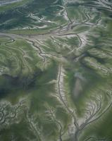 干潟と樹枝状の排水溝 空撮