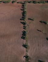 ムーラ南東の農地 国内有数の穀倉地帯(小麦)