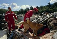 救助犬のレスキュー訓練