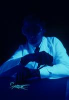 サソリ 紫外線をあてる 実験室内