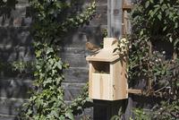 巣箱の上にとまるヨーロッパコマドリ