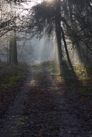 朝もやの森の小径