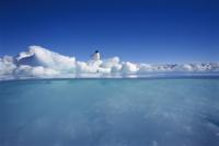 シャチ(オルカ)の目から見た流氷の上のアデリーペンギンと水の