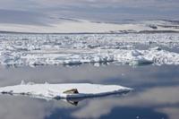 流氷に乗ったアゴヒゲアザラシと広がる流氷原