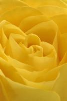 バラの花 32258003567| 写真素材・ストックフォト・画像・イラスト素材|アマナイメージズ
