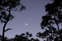 スラッシュマツのシルエットと月と金星