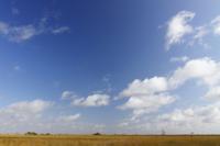 広がる青空と湿地帯