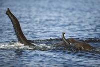 鼻先を水上に出して川を泳ぐアフリカゾウの親子