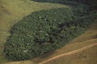伐採地の中に残された降雨林 32258005108| 写真素材・ストックフォト・画像・イラスト素材|アマナイメージズ