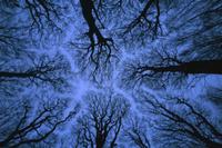 葉を落とした冬の樹冠越しの青空