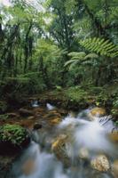 山地の降雨林を流れる渓流