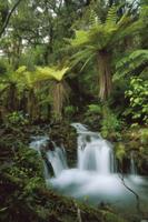 降雨林を流れる渓流沿いのディクソニア(木生シダ)の仲間