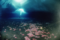底にたくさんのヒトデが見える氷の洞窟を探検するスキューバ・ダ
