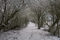 Woodland footpath in winter