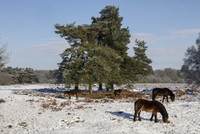 Knettishall Heath is one of Suffolk's largest surviving area