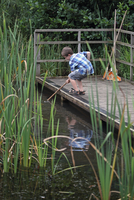 Boy pond dipping with net, Minsmere RSPB Reserve, Suffolk, E