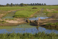 View across wetland nature reserve, RSPB Ouse Washes, Cambri 32259008523| 写真素材・ストックフォト・画像・イラスト素材|アマナイメージズ