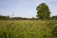Open marshy grassland and reedbed habitat on wetland nature  32259008524| 写真素材・ストックフォト・画像・イラスト素材|アマナイメージズ