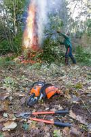 Woodland management of Holme Oak (Quercus ilex), cutting bac