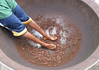Cocoa (Theobroma cacao) crop, beans in large bowl after coat