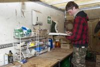 Gamebird farming, trainee gamekeeper filling in animal medic 32259008604| 写真素材・ストックフォト・画像・イラスト素材|アマナイメージズ