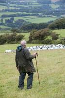 Sheep farming, shepherd with crook working sheepdog on flock
