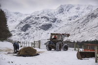 Sheep farming, tractor and silage bale for feed in snow cove