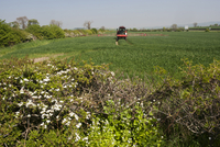 Self-propelled sprayer spraying wheat crop, with hawthorn he