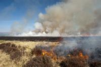 Burning heather moorland on shooting estate, to provide good